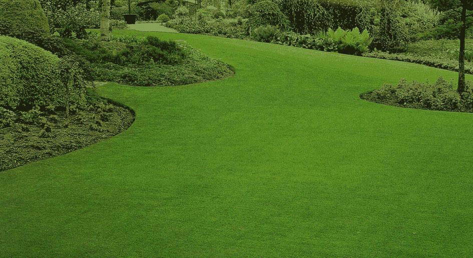Ricerca sviluppo e passione per il prato naturale - Cosa mettere al posto dell erba in giardino ...